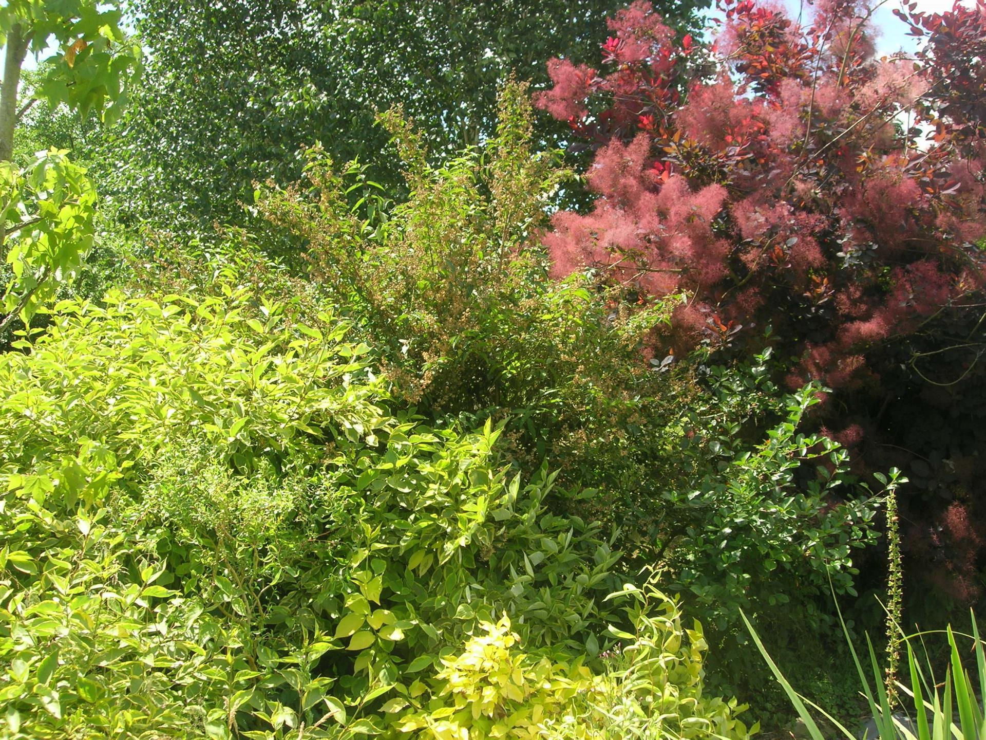 A faire au jardin en janvier les arbres et les arbustes for Jardin janvier