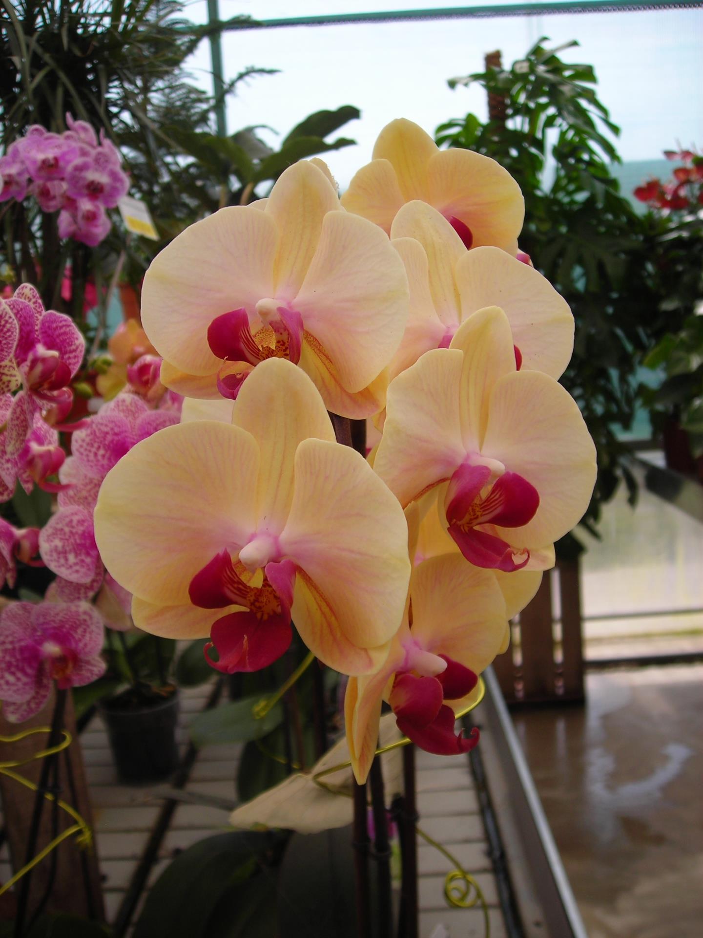Les orchid es - Telecharger coup de coeur ...